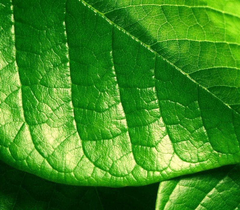 green-leaf-wide-wallpaper-28721
